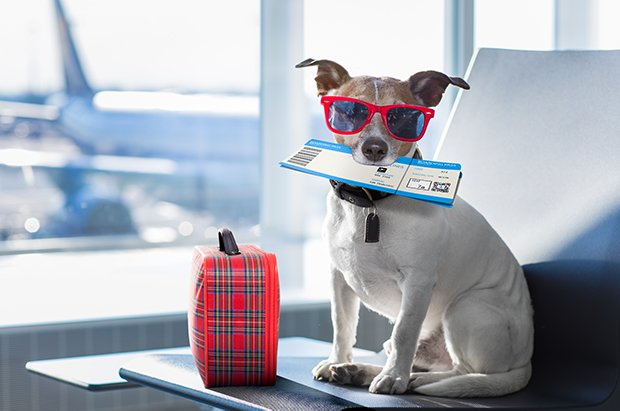 Dog with plane tickets